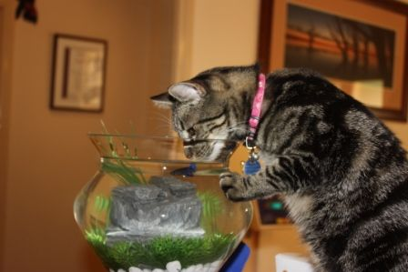"""""""A water bowl with an added bonus"""""""