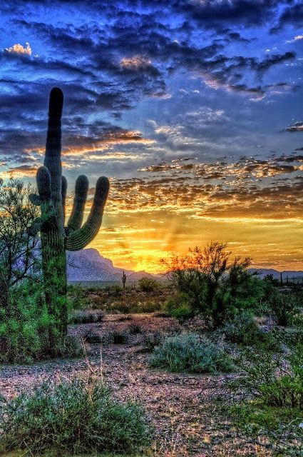 A Beautiful Sunrise over the Sonoran Desert in Arizona.