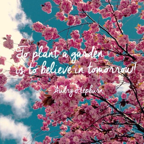 "Vi digger dette sitatet av Audry Hepburn: ""To plant a garden is to believe in tomorrow!"" #bygartnerne #anleggsgartner #hageglede #hageliv #hagearbeid #hagersomvarerlenger"