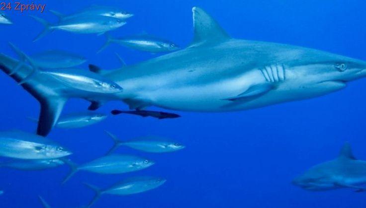 Čínská loď lovila u Galapág chráněné žraloky, posádka jde do vězení
