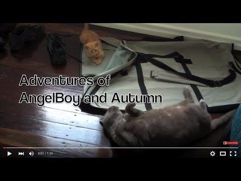 Autumn and AngelBoy Adventures Episode 5 - The Bag #Autumn #AngelBoy #TheGingerNinja #cute #kitten #video #HopeCats 