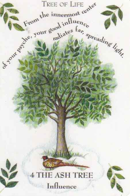 Fraxinus americana  The World Tree; Tree of Life  Third month of the Celtic Tree calendar, February 18th - March 17th  Third consonant of the Ogham alphabet