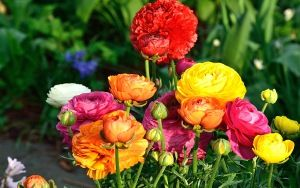 Preview wallpaper bouquet, flowers, colorful