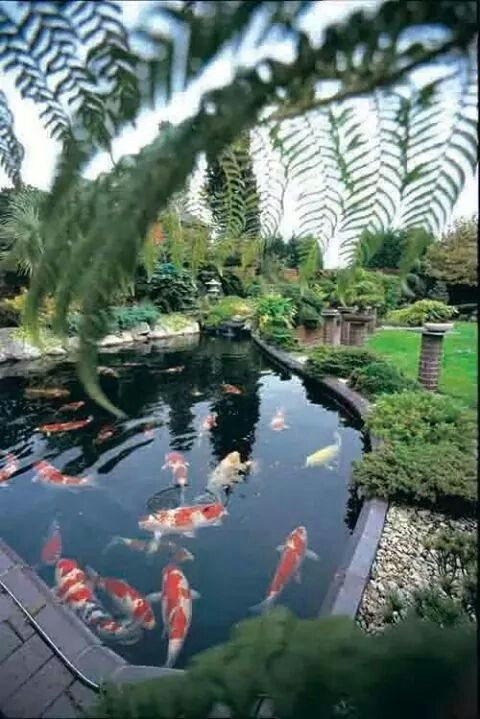 37 best images about bassins de jardin on pinterest - Bassin tonneau poisson nimes ...