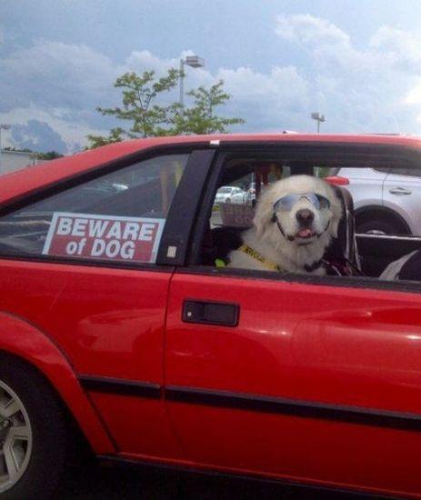 In questa auto non ci sono antifurti... basto io
