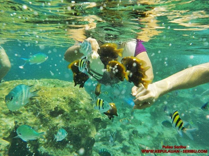 Snorkeling Pulau Seribu - Tourism Pulau Seribu island can be done with family, coworkers, friends, newly married couples, alone, and also with company where we work. Facilities available at the Thousand Islands passable complete enough it also depends on each island, as each island is different amenities No one can snorkel and do not, who can not snorkel is about 30 minutes away from Marina Ancol Jakarta while that can snorkel within approximately less than 1 to 2 hours…