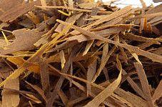Stoffwechsel anregen mit Tee Lapacho Tee