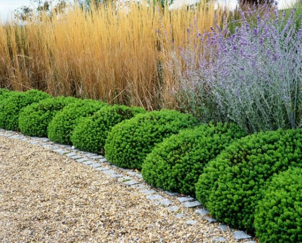 Borders ideas, Perennial combinations, Russian Sage, Shrubby Veronica, golden oats... possible border combination if adapted to zone 5