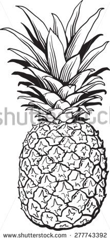Quality pen and ink drawing of a pineapple. Black and white vector Illustration.  - stock vector