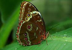 leaves butterflies Wallpaper