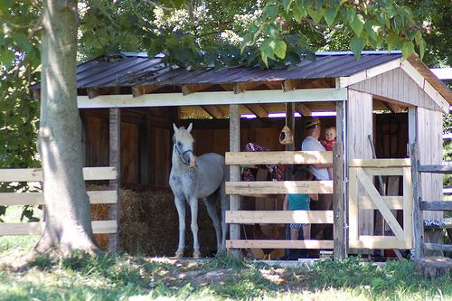 Beautiful small horse barn - PERFECT for pasture horses.