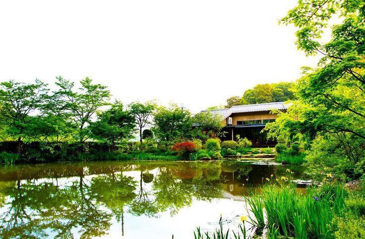 緑が濃く 以前の桜ライトアップとほぼ同じアングルで  #ゆう月 #yuzuki #綾部 #ayabe #京都 #kyoto #料亭 #Japan #Japanese #会席料理 #kaiseki #花 #深緑 #フラワー #flower #flowers #日本庭園 #池 #初夏 #japaneseculture #instagramjapan #instagood #nikonjapan #nikonflowers #ファインダー越しの私の世界 #写真好きな人と繋がりたい #写真撮ってる人と繋がりたい #followme #花を生け写真を撮る料理人 by yuzuki_chef_naoto