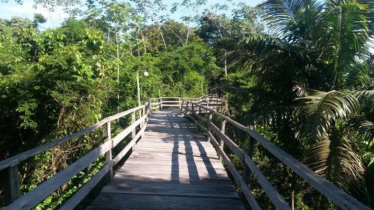 Passarela sobre palafitas, na floresta, Hotel Pakaas, Rondônia, Brasil