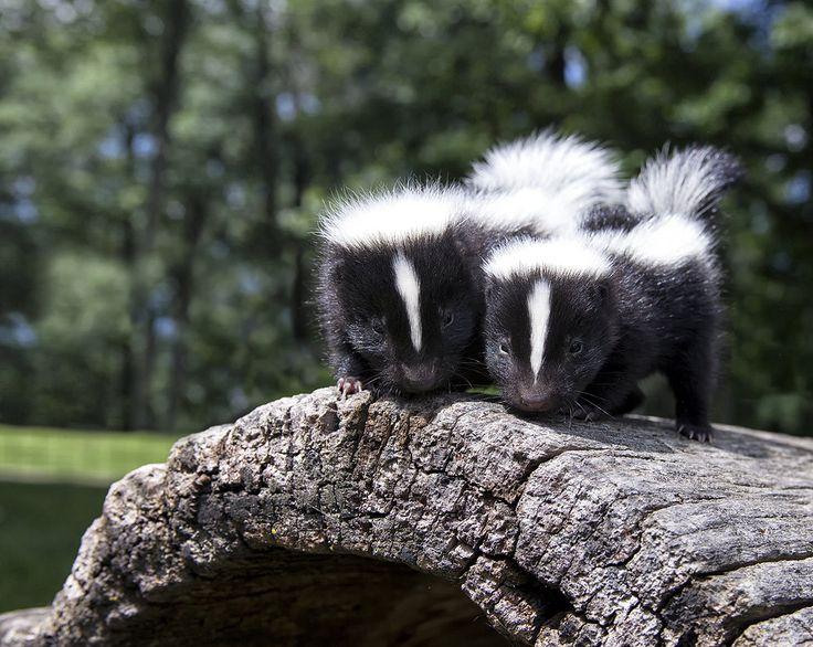 #Exterminator Services Québec (Canadian Province) City, Pest Control, Capture, Moisissure, Extermination, Bungalow, House, Rat- Catcher Residential, Commercial, Industrial Living  Wasps,  Removal, Consultant Cage . Extermination  Montreal (City/Town/Village) price exterminator bed  , how much does it cost for a professional to remove raccoons from attic. rat extermination cost , rat exterminators near me , Humane  control , Exclusion , Nuisance , Chimney , decomposition smells , Laval 450