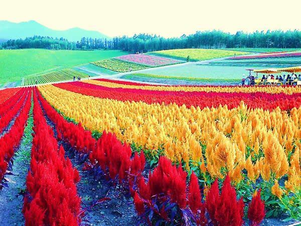 10 個北海道必去景點 | 日本與韓國之間 – U Blog 博客