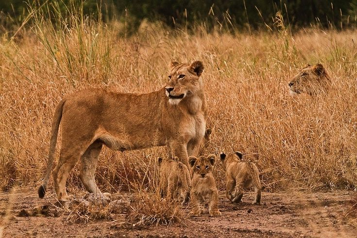A safari makes for an unforgettable family holiday, with exhilarating activities for the entire family to enjoy, memories made together that will last a lifetime and opportunities to learn and grow together.