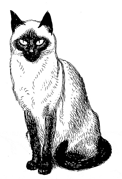 A drawing of a siamese cat.  Imprint	 October 15, 1949.