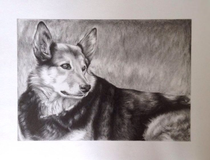 My drawing of my old mate Pluto.   Amy Peters -Artist Facebook