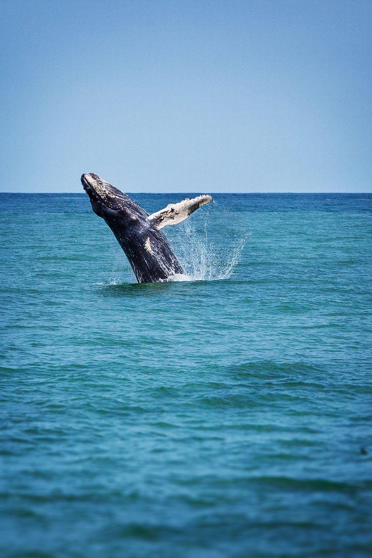5 bonnes raisons de voyager au Costa Rica (bilan et carnet pratique)