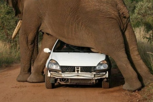 Southafrica, Laugh, Funny Humor, Mothers Earth, Elephant, South Africa, Funny Stuff, Funny Animal, Animal Funny