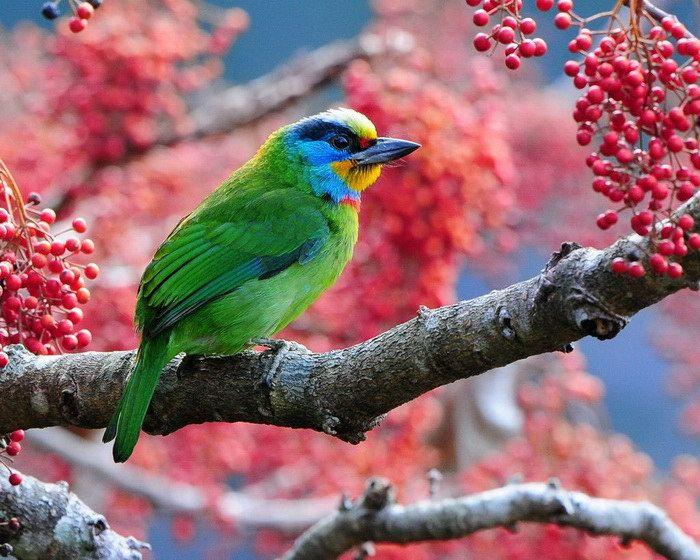 Экзотические птицам азиатских тропиков от фотодуэта Sushyue Liao