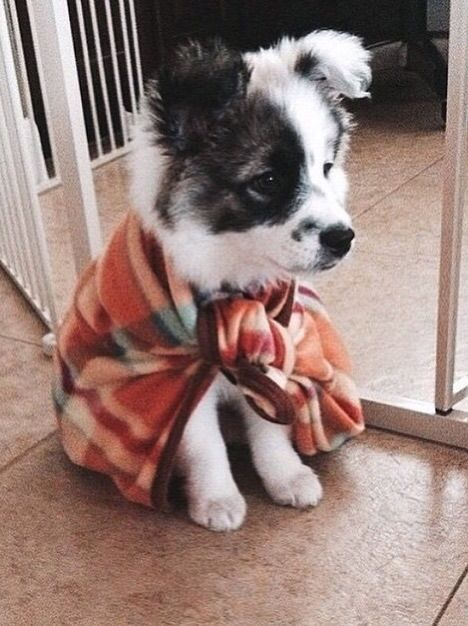 Looks like a border collie puppy
