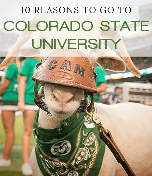 10 Reasons To Go To Colorado State University