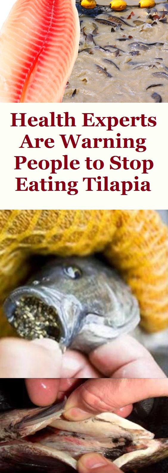 Health Experts Are Warning People to Stop Eating Tilapia