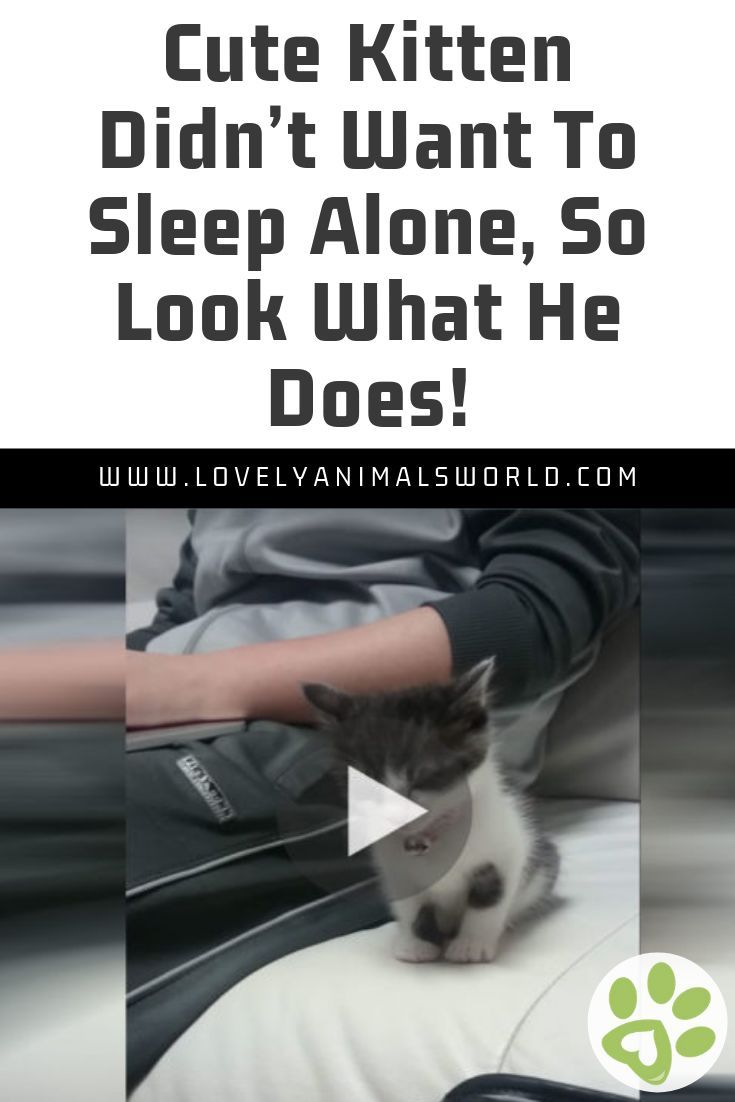 Cute Kitten Didn't Want To Sleep Alone, So Look What He Does!