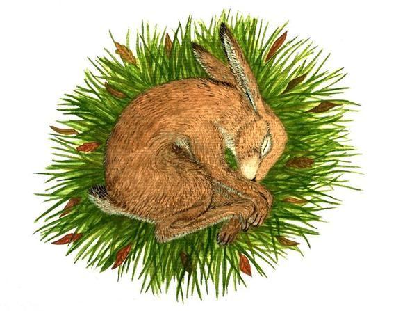 Sleeping Hare Archival Art Print Leveret Hares Hare Art Peaceful Rest Nesting Hare Nursery Decor H Art Prints Art Prints