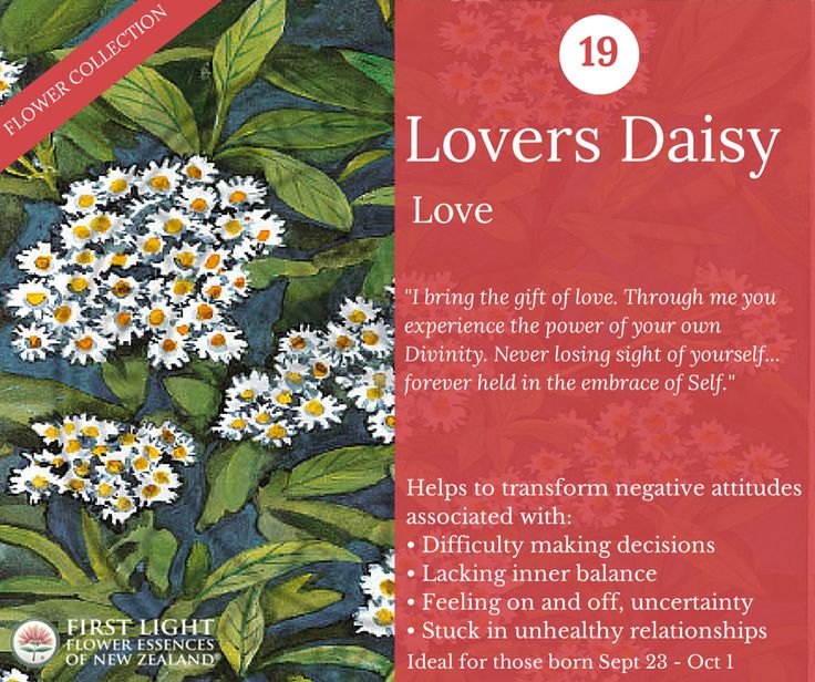 Lovers Daisy - Love - use when feel drawn into negative, obsessive, karmic relationship patterns or when attracted to the 'wrong' types or to relationships where there are irreconcilable differences. Useful for those who give their power away in relationships or if prone to victim/saviour relationship patterns, codependency, power struggles. Personal power flower for those born Sep 23 - Oct 1 (Libra).