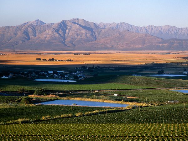 Picture of the vineyards at Riebeek Kasteel, Swartland, South Africa