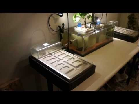 Aquarium-Formicarium Overview HD 1080p - YouTube