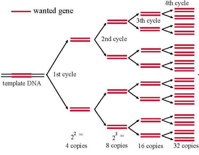 the rna world theory biology essay New theory addresses how life on earth arose from the primordial muck  the new papers - one in molecular biology and evolution,  the widely accepted rna-world theory posits that rna - the .