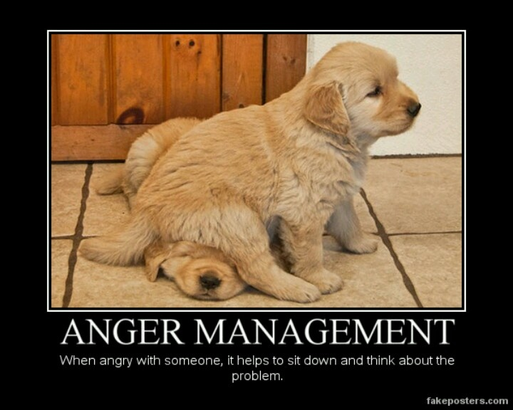 Funny Anger Quotes: Cute Pups, Animals,& FUNNY