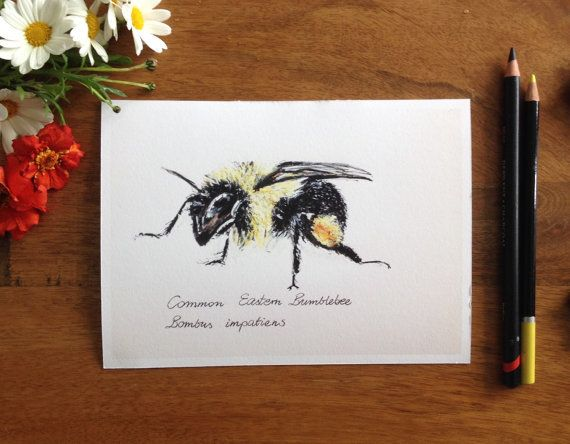 Bumble bee print illustration bee drawing by MesmerizeGarden