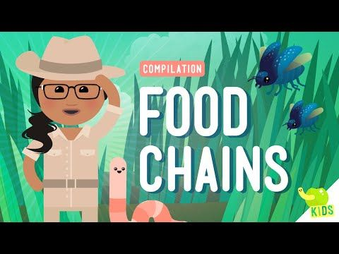 CC Cycle 2 Week 3 - This is a 15 minute video!!! Food Chains Compilation: Crash Course Kids - YouTube