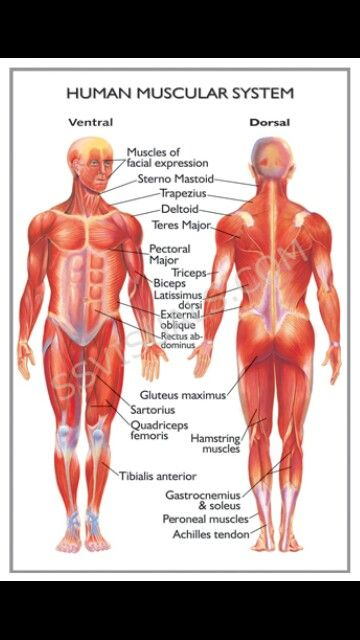 17 best EMT images on Pinterest | Health, Human anatomy and Human body