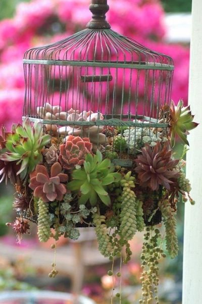 succulents in repurposed bird cage