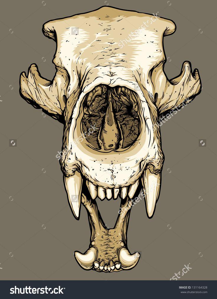 Bear Skull Drawing Best 25+ Bear skull id...