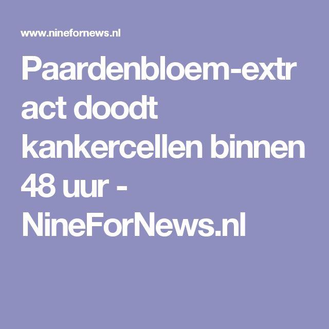 Paardenbloem-extract doodt kankercellen binnen 48 uur - NineForNews.nl