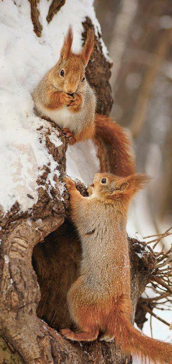 Écureuil-avec-la-neige