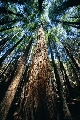 Explore the California redwoods at most state parks near Fort Bragg.