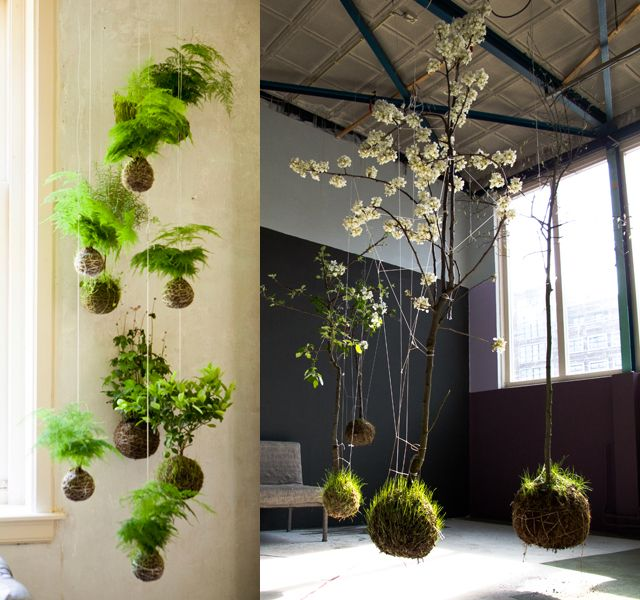 Inspired obsessed utterly distracted by these kokedama for Indoor japanese garden plants