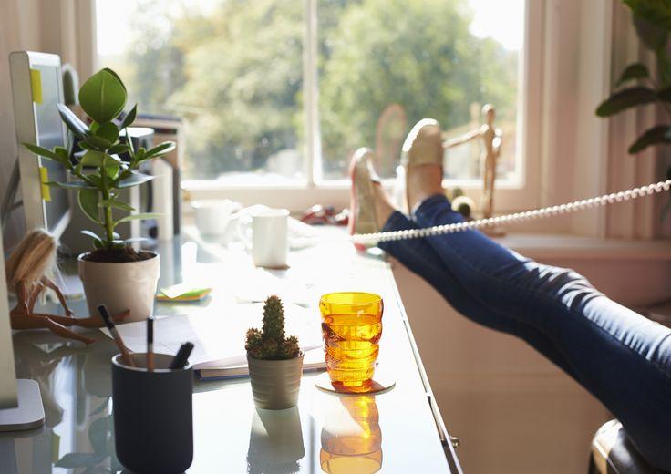 8 plantas que limpian el aire de tu casa u oficina