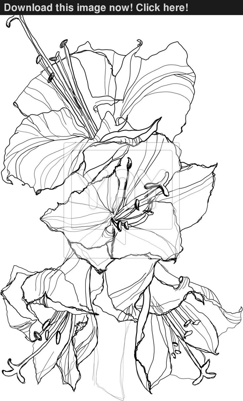 hibiscus 970—1600 FleursFlowers