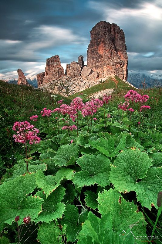 The Wild Gardeen of Towers - the Alps of Italy