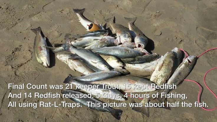1000 ideas about surf fishing on pinterest fishing tips for Speckled trout fishing lures