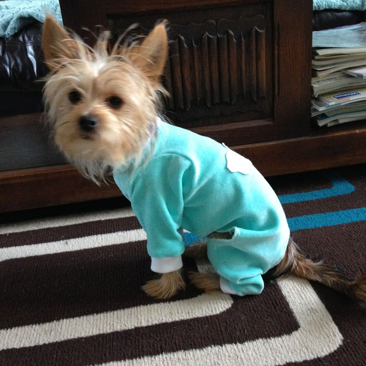Puppy Pjs In Turquoise Velour My Yorkie Chihuhua X Puppy