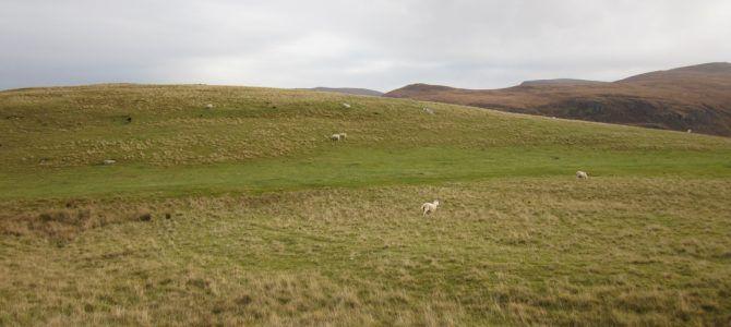 Un jour, une photo : Moutons de Sandwood Bay